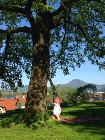 Sirsasana am Baum
